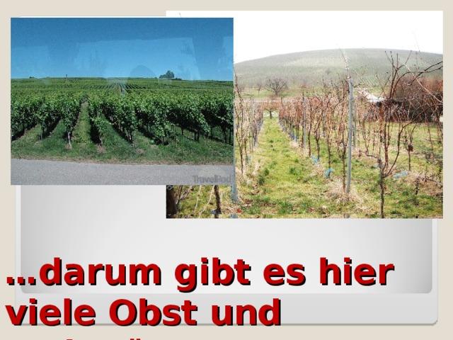 … darum gibt es hier viele Obst und Weingärten.