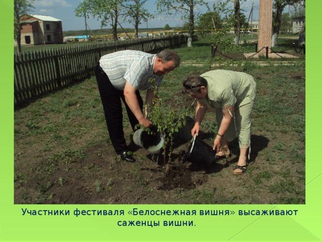 Участники фестиваля «Белоснежная вишня» высаживают саженцы вишни.