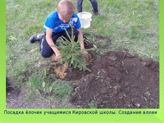 Посадка ёлочек учащимися Кировской школы. Создание аллеи
