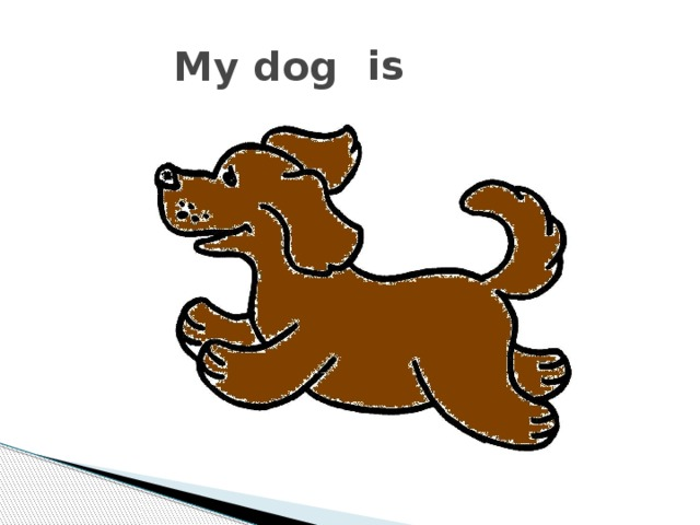 is My dog