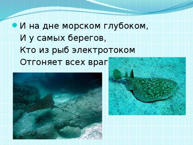 И на дне морском глубоком,