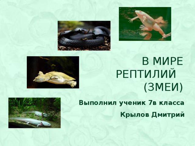В мире  рептилий  (змеи) Выполнил ученик 7в класса Крылов Дмитрий