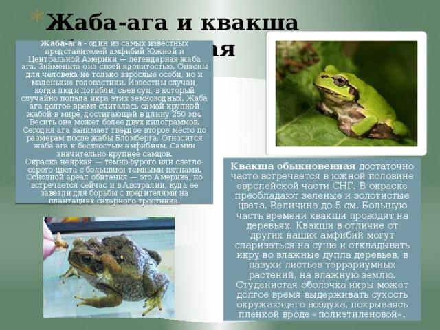 Жаба-ага и квакша обыкновенная