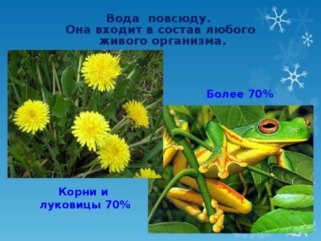 Вода повсюду. Она входит в состав любого  живого организма. Более 70%  Корни и луковицы 70%