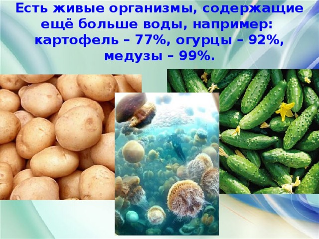 Есть живые организмы, содержащие ещё больше воды, например:  картофель – 77%, огурцы – 92%, медузы – 99%.