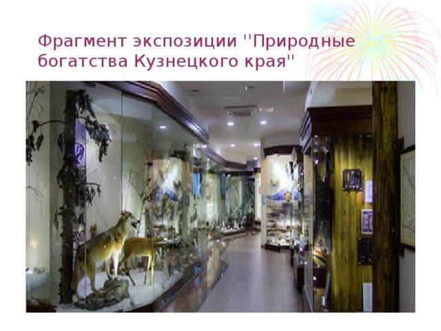 Фрагмент экспозиции ''Природные богатства Кузнецкого края''