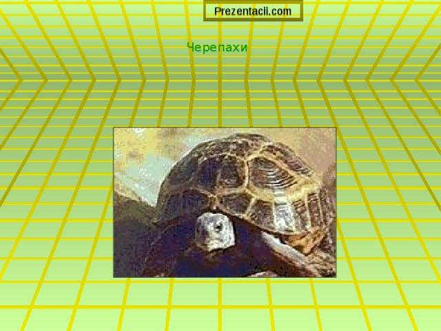 Prezentacii.com Черепахи