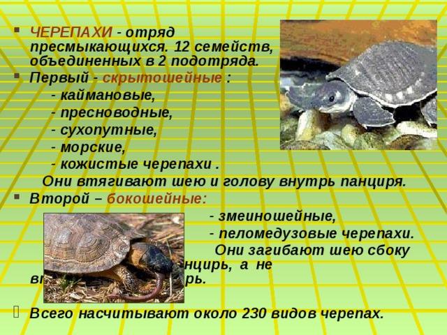 ЧЕРЕПАХИ - отряд пресмыкающихся. 12 семейств, объединенных в 2 подотряда. Первый - скрытошейные :  - каймановые,  - пресноводные,  - сухопутные,  - морские,  - кожистые черепахи .  Они втягивают шею и голову внутрь панциря. Второй – бокошейные:  - змеиношейные,  - пеломедузовые черепахи.  Они загибают шею сбоку     под панцирь, а не       втягивают ее внутрь.  Всего насчитывают около 230 видов черепах.