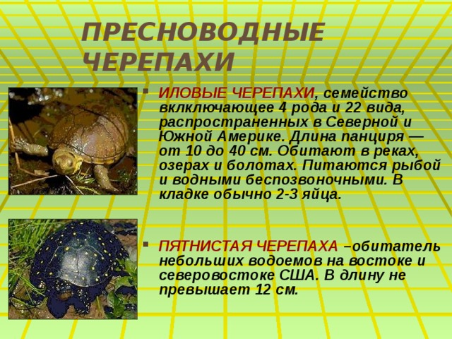 ПРЕСНОВОДНЫЕ ЧЕРЕПАХИ ИЛОВЫЕ ЧЕРЕПАХИ , семейство вклключающее 4 рода и 22 вида, распространенных в Северной и Южной Америке. Длина панциря — от 10 до 40 см. Обитают в реках, озерах и болотах. Питаются рыбой и водными беспозвоночными. В кладке обычно 2-3 яйца.