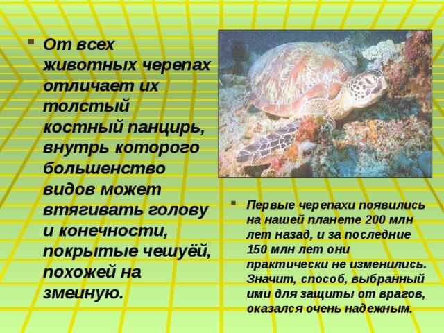 От всех животных черепах отличает их толстый костный панцирь, внутрь которого большенство видов может втягивать голову и конечности, покрытые чешуёй, похожей на змеиную. Первые черепахи появились на нашей планете 200 млн лет назад, и за последние 150 млн лет они практически не изменились. Значит, способ, выбранный ими для защиты от врагов, оказался очень надежным.