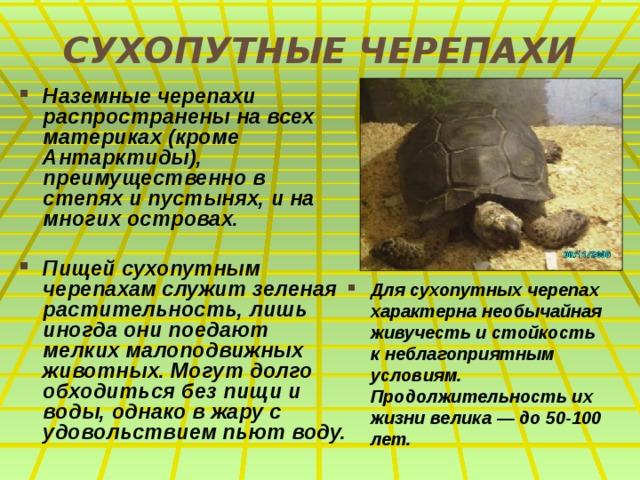 СУХОПУТНЫЕ ЧЕРЕПАХИ Наземные черепахи распространены на всех материках (кроме Антарктиды), преимущественно в степях и пустынях, и на многих островах.