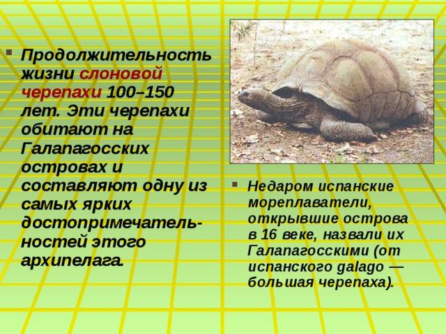 Продолжительность жизни слоновой черепахи 100–150 лет. Эти черепахи обитают на Галапагосских островах и составляют одну из самых ярких достопримечатель-ностей этого архипелага.  Недаром испанские мореплаватели, открывшие острова в 16 веке, назвали их Галапагосскими (от испанского galago — большая черепаха).