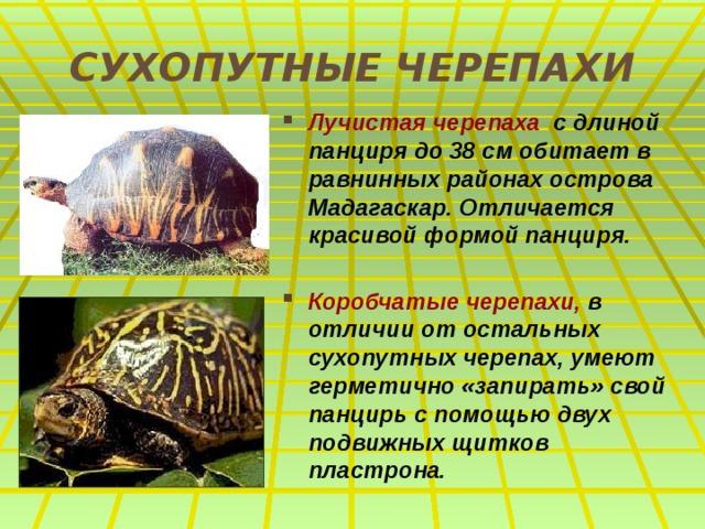 СУХОПУТНЫЕ ЧЕРЕПАХИ Лучистая черепаха с длиной панциря до 38 см обитает в равнинных районах острова Мадагаскар. Отличается красивой формой панциря.