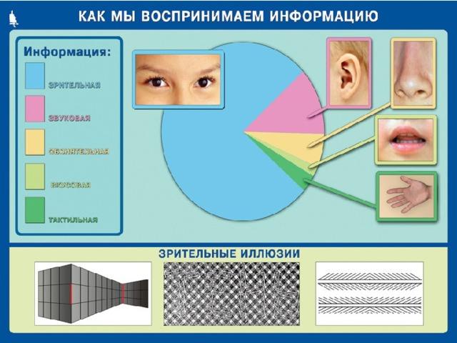 Большая часть информации поступает к нам через зрение и слух. Но и запахи , и вкусовые и осязательные ощущения тоже несут информацию. Можно сказать, что зрение, слух, вкус, обоняние, осязание являются информационными каналами между внешним миром и человеком. При утрате одного из таких каналов (например, зрения или слуха) усиливается информационная роль других каналов. Известно, что незрячие люди острее слышат, для них возрастает значение осязания.