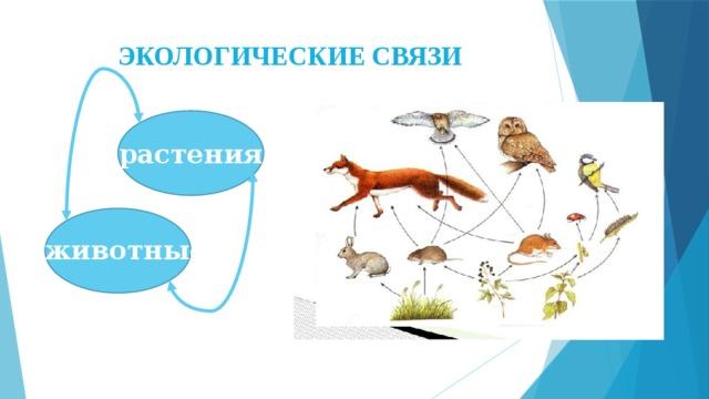 ЭКОЛОГИЧЕСКИЕ СВЯЗИ растения животные