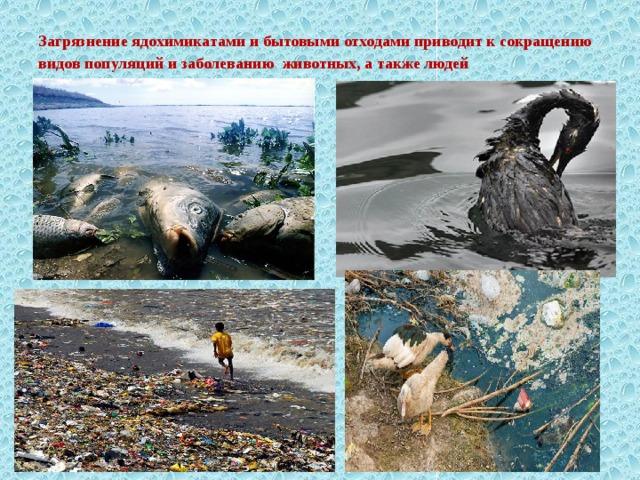 Загрязнение ядохимикатами и бытовыми отходами приводит к сокращению видов популяций и заболеванию животных, а также людей