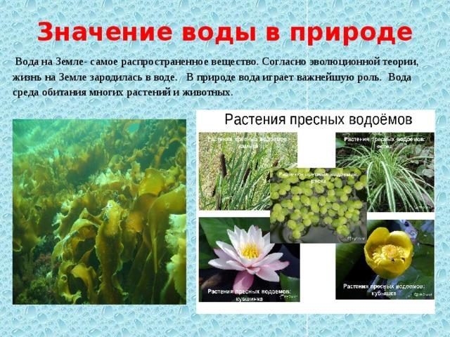 Значение воды в природе  Вода на Земле- самое распространенное вещество. Согласно эволюционной теории, жизнь на Земле зародилась в воде. В природе вода играет важнейшую роль. Вода среда обитания многих растений и животных.