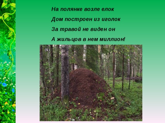 На полянке возле елок Дом построен из иголок За травой не виден он А жильцов в нем миллион!