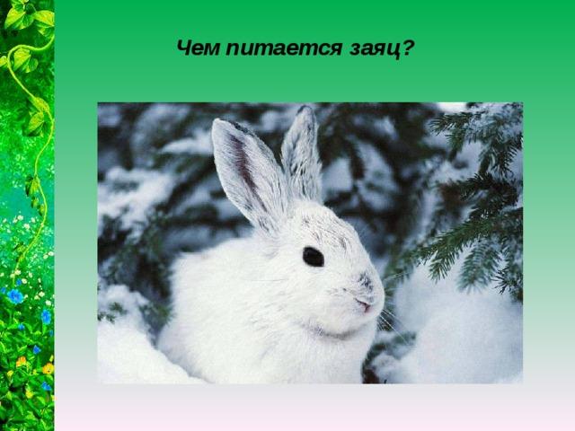 Чем питается заяц?