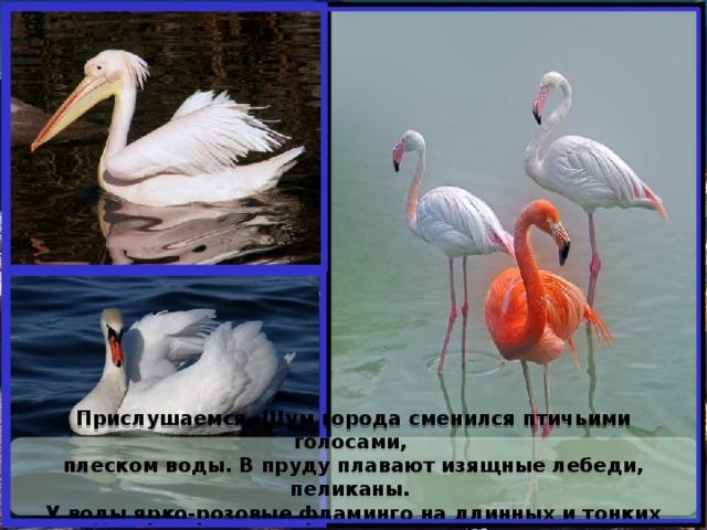 Прислушаемся. Шум города сменился птичьими голосами, плеском воды. В пруду плавают изящные лебеди, пеликаны. У воды ярко-розовые фламинго на длинных и тонких ногах.