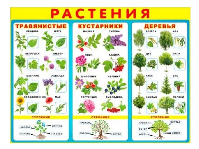 нее пятеро картинки по теме кустарники и их названия остальные