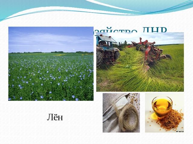 Сельское хозяйство ДНР Лён