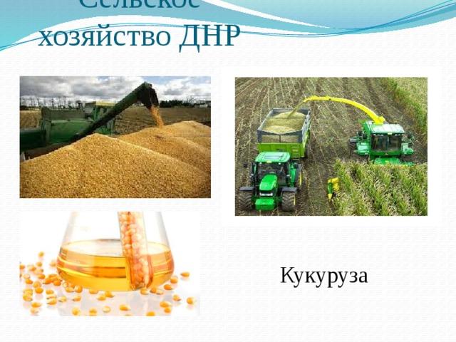 Cельское хозяйство ДНР Кукуруза