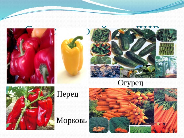 Сельское хозяйство ДНР Огурeц Перец Морковь