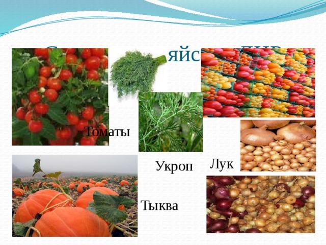 Сельское хозяйство ДНР Томаты Лук Укроп Тыква 3