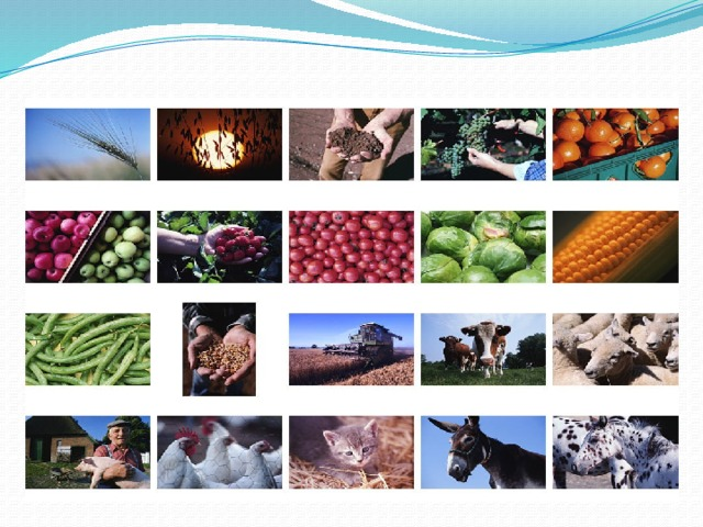 Сельское хозяйство ДНР