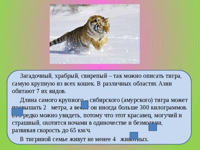 Загадочный, храбрый, свирепый – так можно описать тигра, самую крупную из всех кошек. В различных областях Азии обитают 7 их видов.  Длина самого крупного – сибирского (амурского) тигра может превышать 2 метра, а весит он иногда больше 300 килограммов. Его редко можно увидеть, потому что этот красавец, могучий и страшный, охотится ночами в одиночестве и безмолвии, развивая скорость до 65 км/ч.  В тигриной семье живут не менее 4 животных.