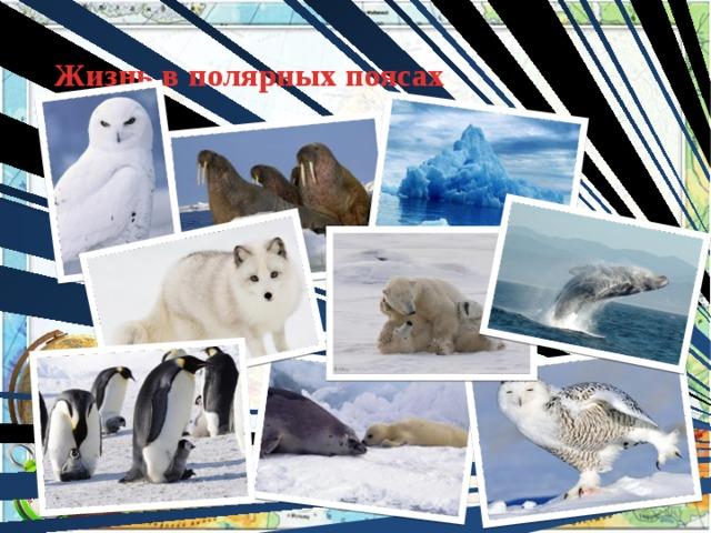 Жизнь в полярных поясах