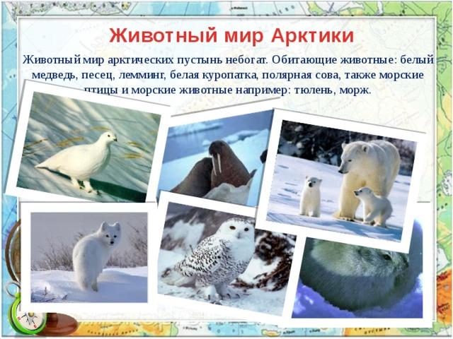 Животный мир Арктики Животный мир арктических пустынь небогат. Обитающие животные: белый медведь, песец, лемминг, белая куропатка, полярная сова, также морские птицы и морские животные например: тюлень, морж.