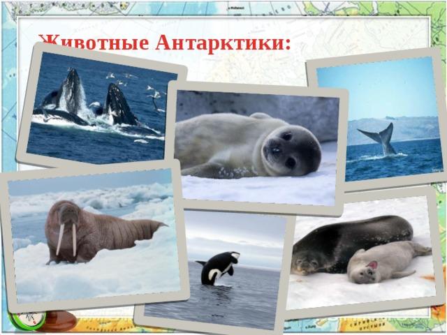 Животные Антарктики: