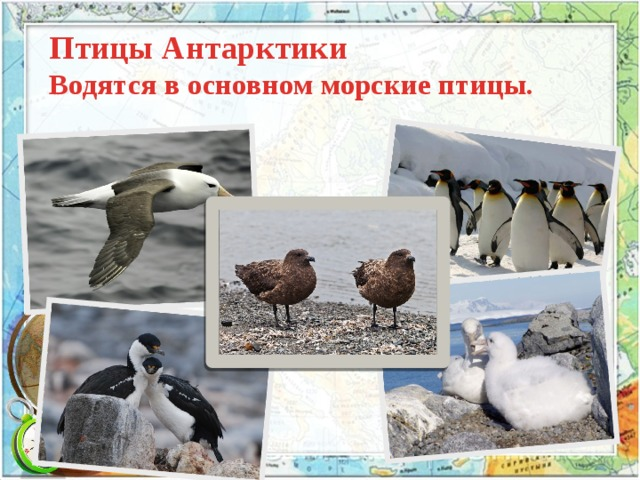 Птицы Антарктики  Водятся в основном морские птицы.