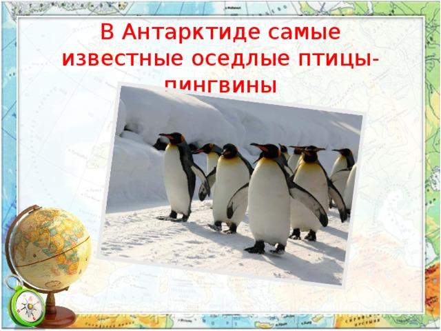 В Антарктиде самые известные оседлые птицы- пингвины