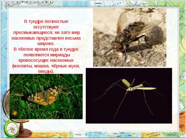 В тундре полностью отсутствуют  пресмыкающиеся, но зато мир насекомых представлен весьма широко. В тёплое время года в тундре  появляются мириады кровососущих насекомых (москиты, мошка, чёрные мухи, оводы). Москит