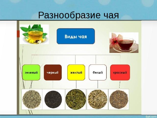 Разнообразие чая