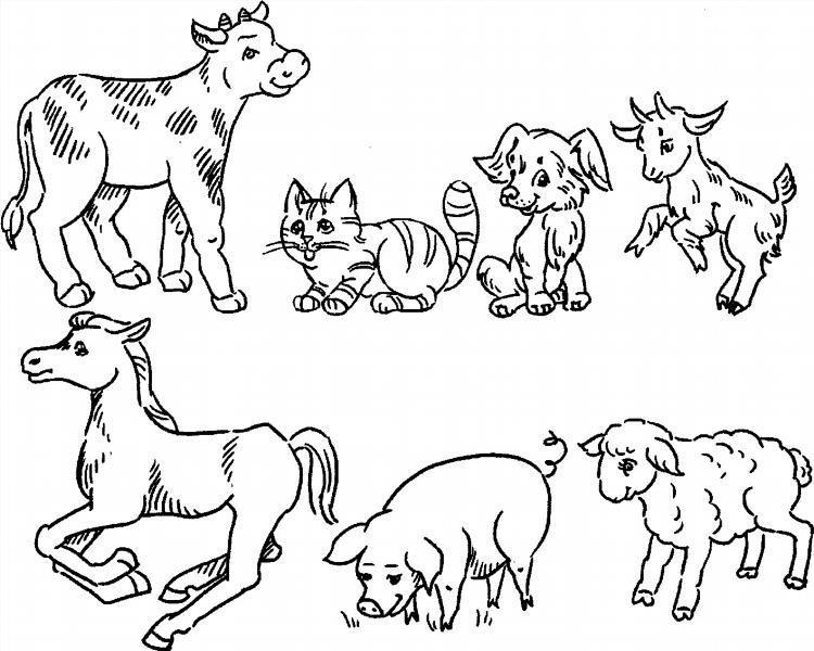 Картинки животных домашних и диких для распечатки