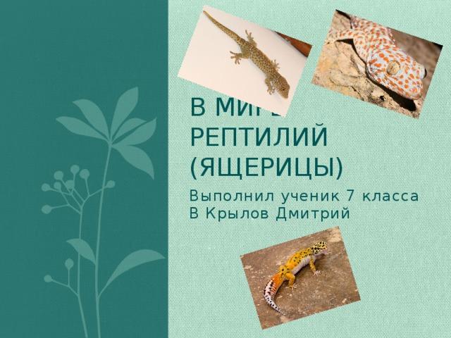 В мире рептилий  (ящерицы) Выполнил ученик 7 класса В Крылов Дмитрий