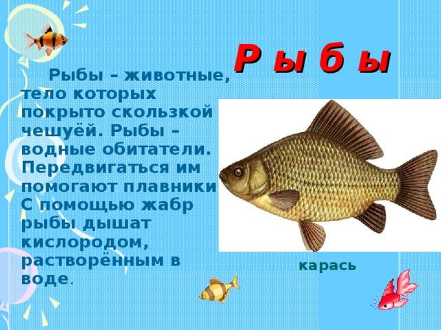 Р ы б ы  Рыбы – животные, тело которых покрыто скользкой чешуёй. Рыбы – водные обитатели. Передвигаться им помогают плавники. С помощью жабр рыбы дышат кислородом, растворённым в воде . карась