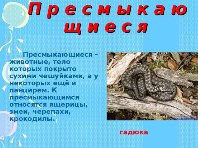 П р е с м ы к а ю щ и е с я   Пресмыкающиеся – животные, тело которых покрыто сухими чешуйками, а у некоторых ещё и панцирем. К пресмыкающимся относятся ящерицы, змеи, черепахи, крокодилы. гадюка