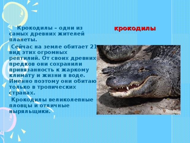 крокодилы  Крокодилы – одни из самых древних жителей планеты.  Сейчас на земле обитает 21 вид этих огромных рептилий. От своих древних предков они сохранили привязанность к жаркому климату и жизни в воде. Именно поэтому они обитают только в тропических странах.  Крокодилы великолепные пловцы и отличные ныряльщики.