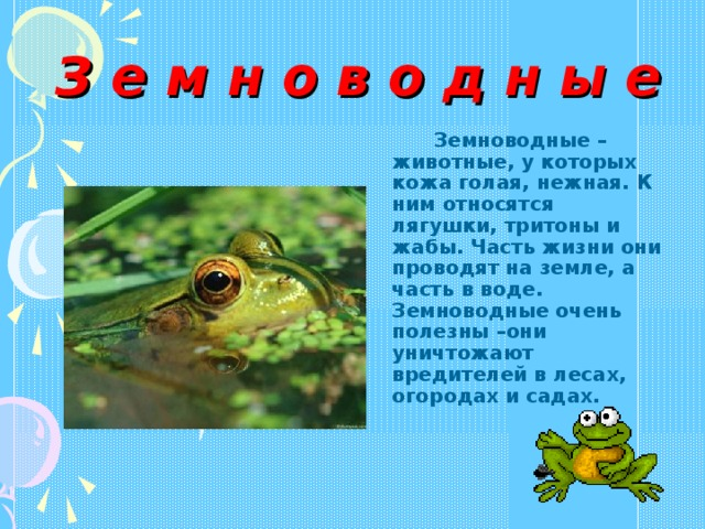 З е м н о в о д н ы е  Земноводные – животные, у которых кожа голая, нежная. К ним относятся лягушки, тритоны и жабы. Часть жизни они проводят на земле, а часть в воде. Земноводные очень полезны –они уничтожают вредителей в лесах, огородах и садах.