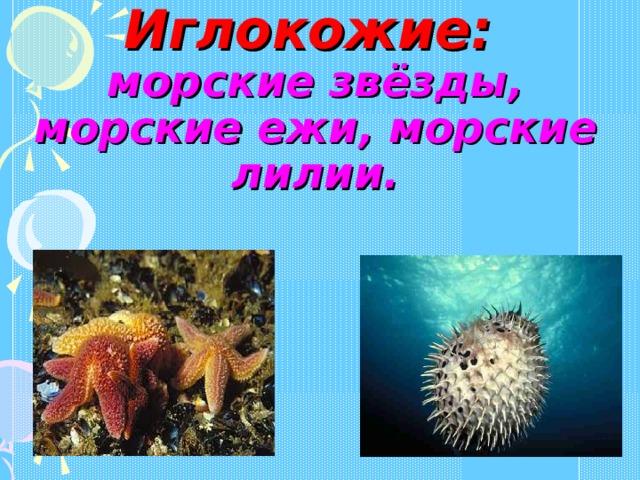 Иглокожие:   морские звёзды, морские ежи, морские лилии.
