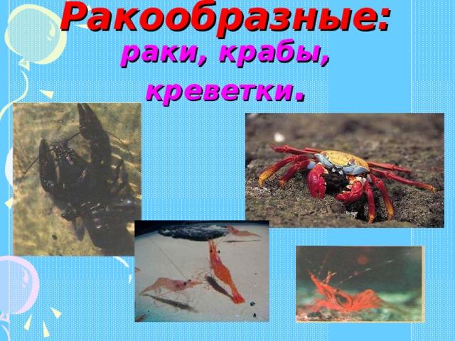 Ракообразные: раки, крабы, креветки .