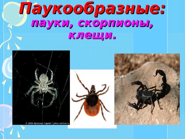 Паукообразные:  пауки, скорпионы, клещи.