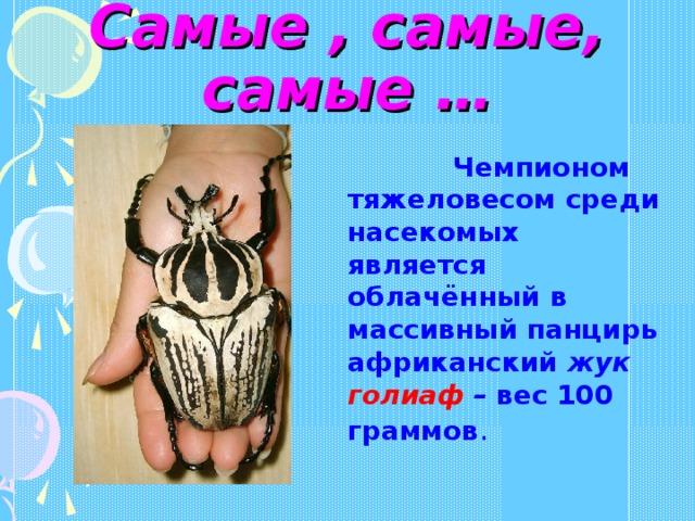 Самые , самые, самые …  Чемпионом тяжеловесом среди насекомых является облачённый в массивный панцирь африканский жук голиаф – вес 100 граммов .