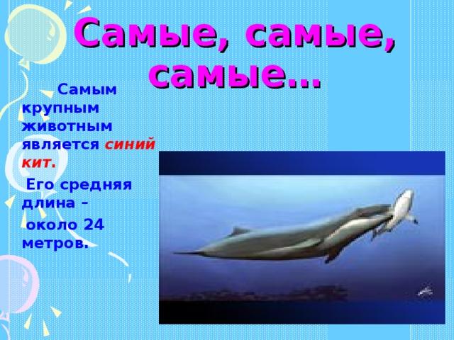 Самые, самые, самые…  Самым крупным животным является синий кит .  Его средняя длина –  около 24 метров.