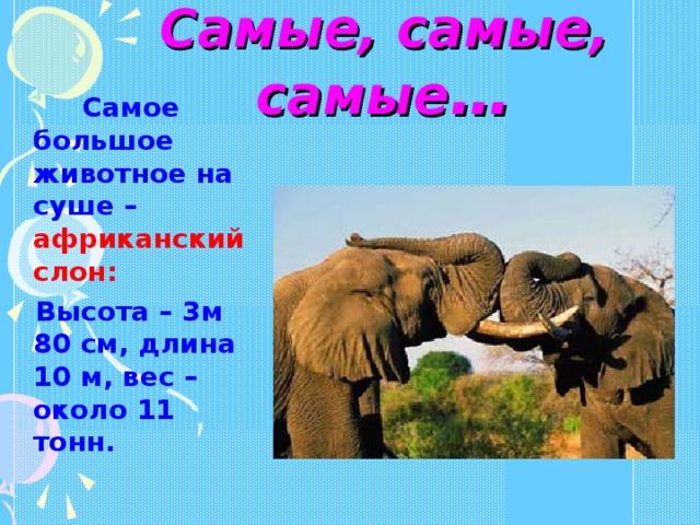 Самые, самые, самые …  Самое большое животное на суше – африканский слон:  Высота – 3м 80 см, длина 10 м, вес – около 11 тонн.